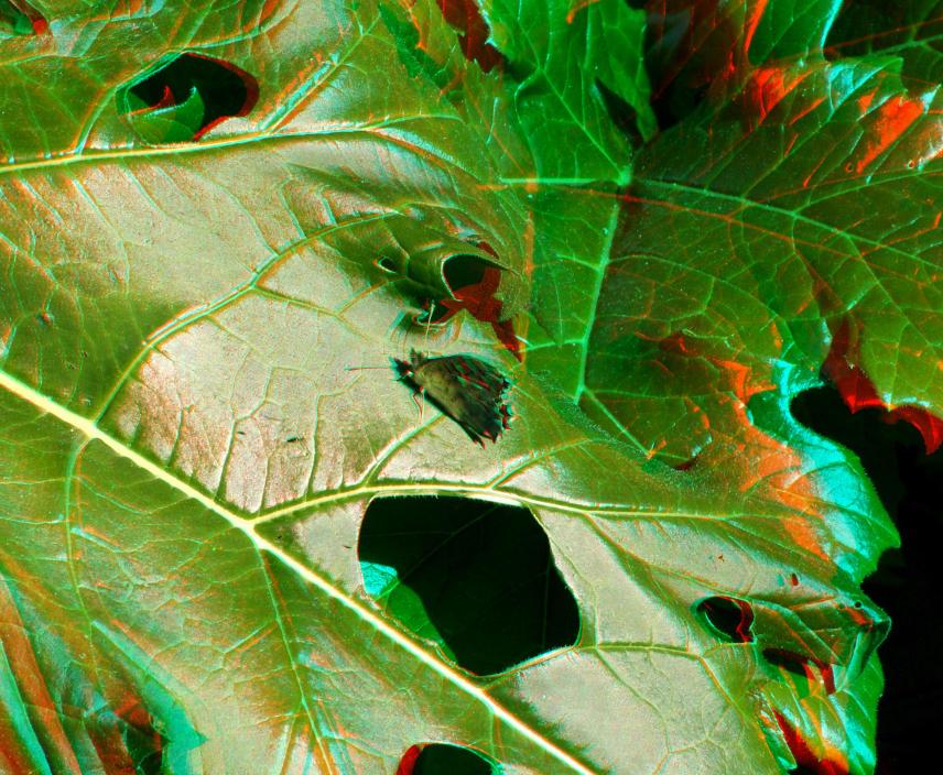 Mariposa 3D... o como volver locos los ojos (F. Xavier Vilamanyà Prat)