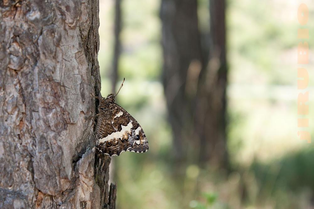 mariposa en el árbol (Jose Luis Rubio Perez)