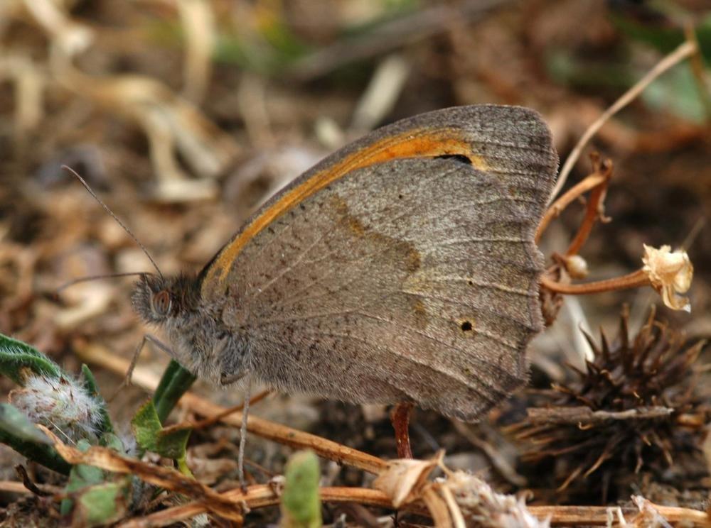 Mariposa en suelo. (Luis Montalbán Pozas)