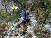 Mariposa, lepidóptero diurno.