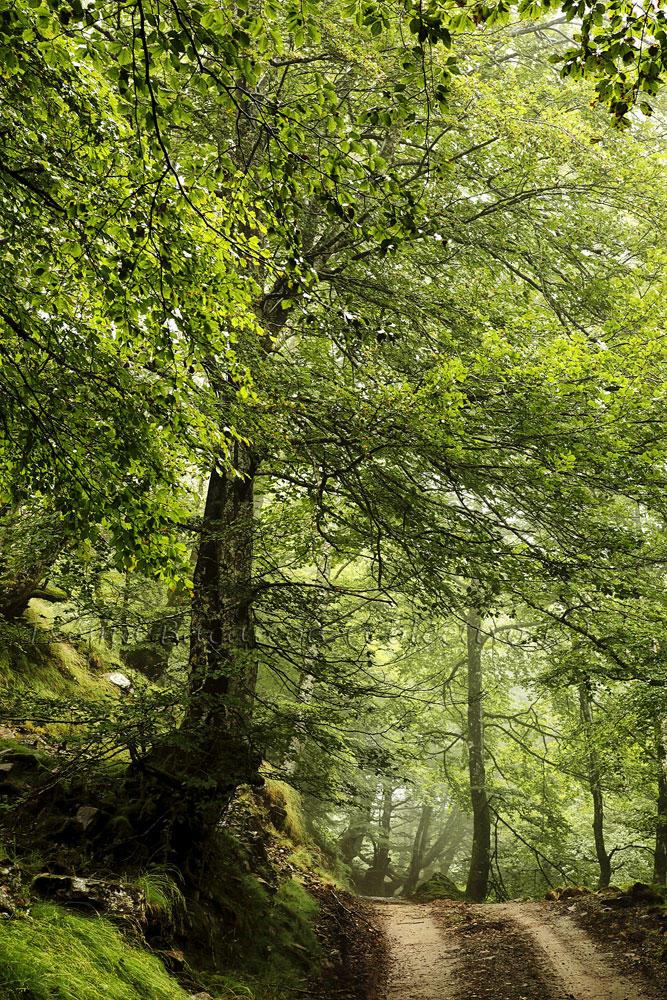 Mis verdes caminos (Txema Bacaicoa (Colectivo IS))