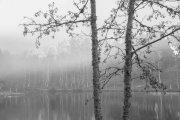 Niebla en el lago