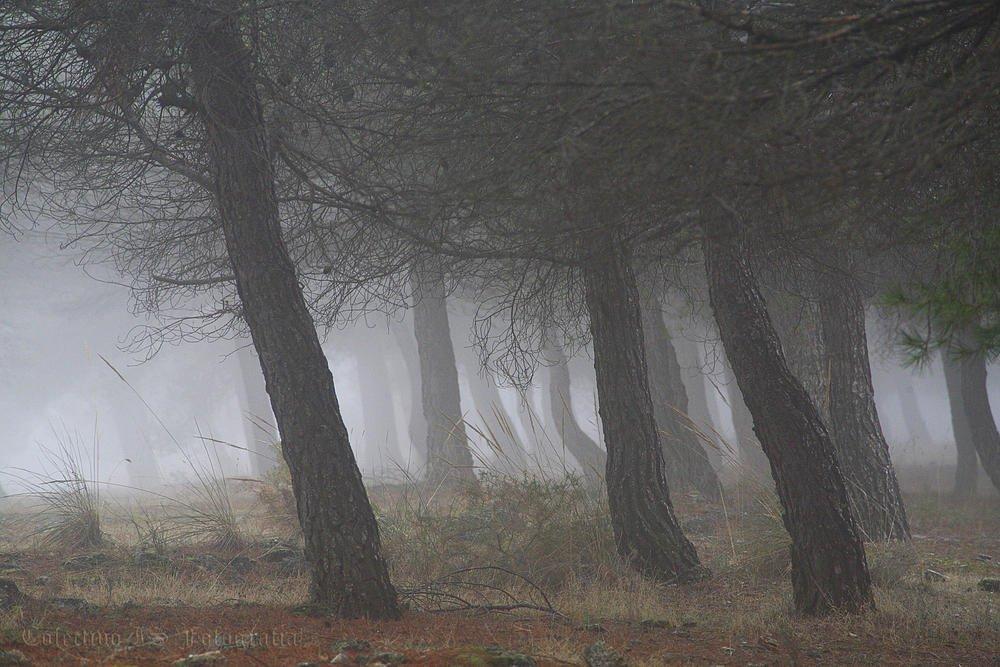Nieblas (Txema Bacaicoa (Colectivo IS))