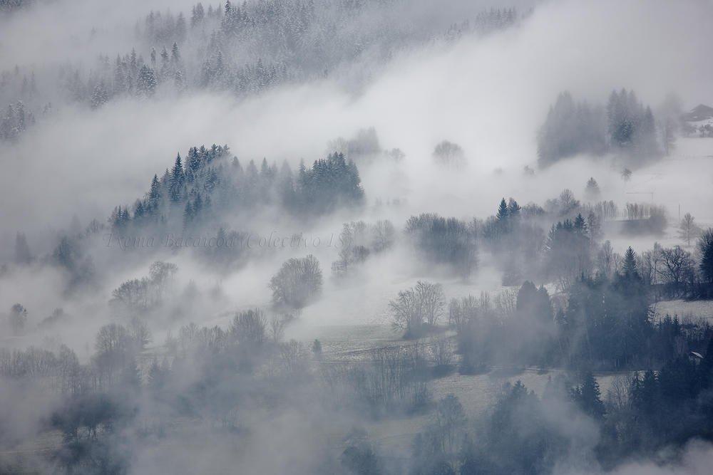 Nieblas apinas (Txema Bacaicoa (Colectivo IS))