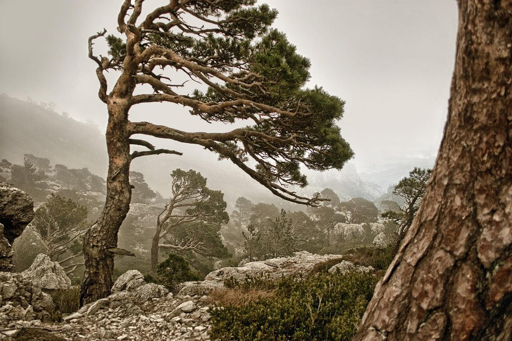 Nieblas en el Mont Caro (Salvador Solé Soriano)