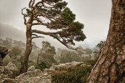 Nieblas en el Mont Caro