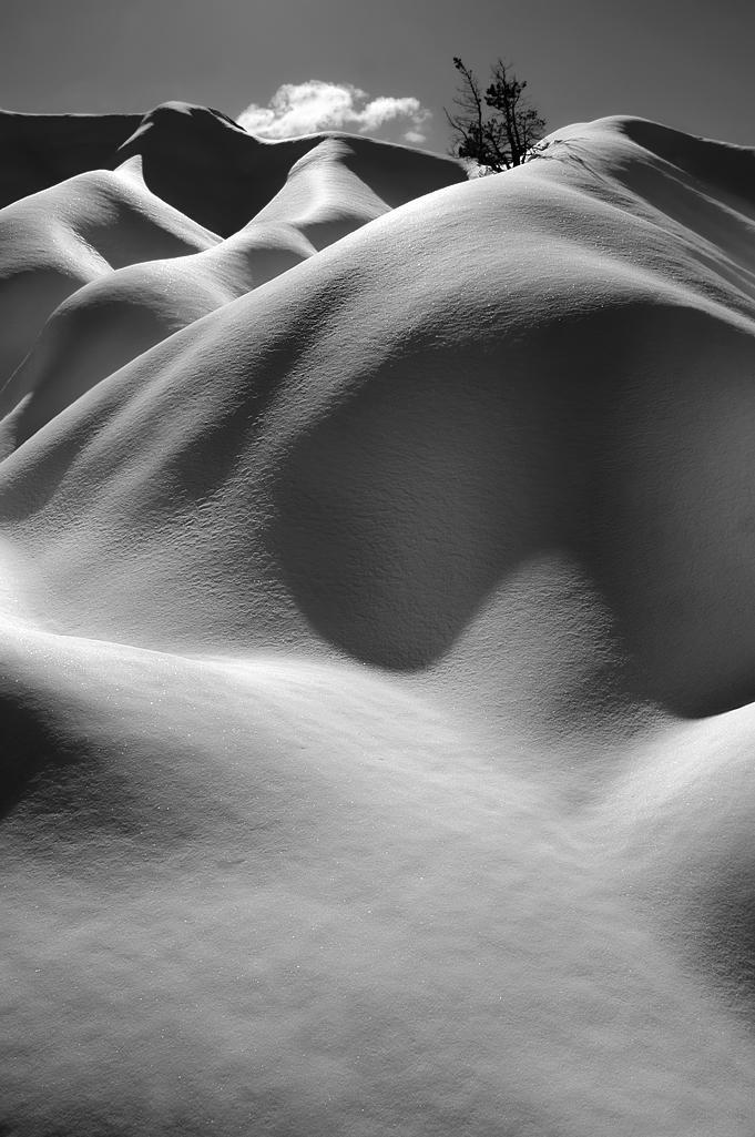 Nieve sobre arcilla. Y un pino (Salvador Solé Soriano)