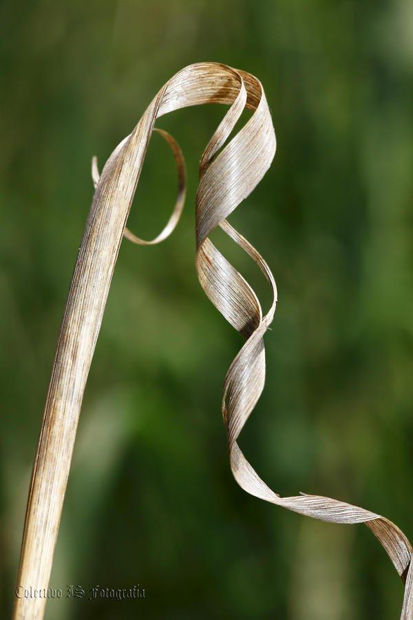 No es una orquídea (Txema Bacaicoa (Colectivo IS))