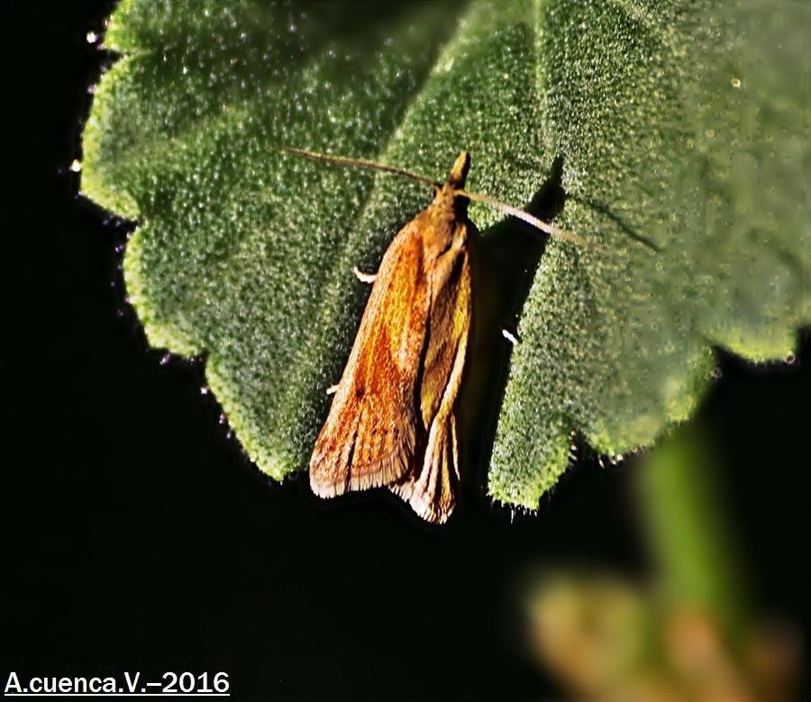 nocturna (Antonio Cuenca.   vaya)