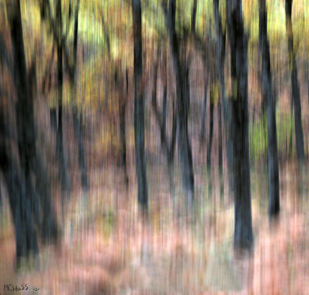 Oda de otoño (María Jesús López B.)