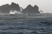 Oleaje oceánico