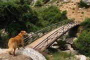 Opari y el puente hacia la Sierra de la Empanada