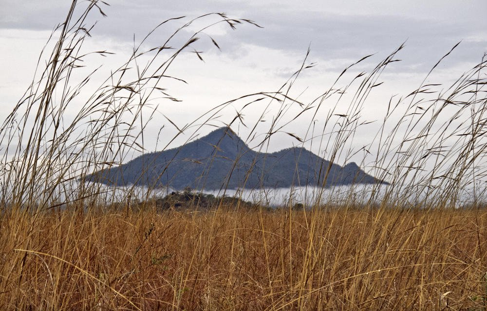 Paisaje de herbazal (Salvador Solé Soriano)