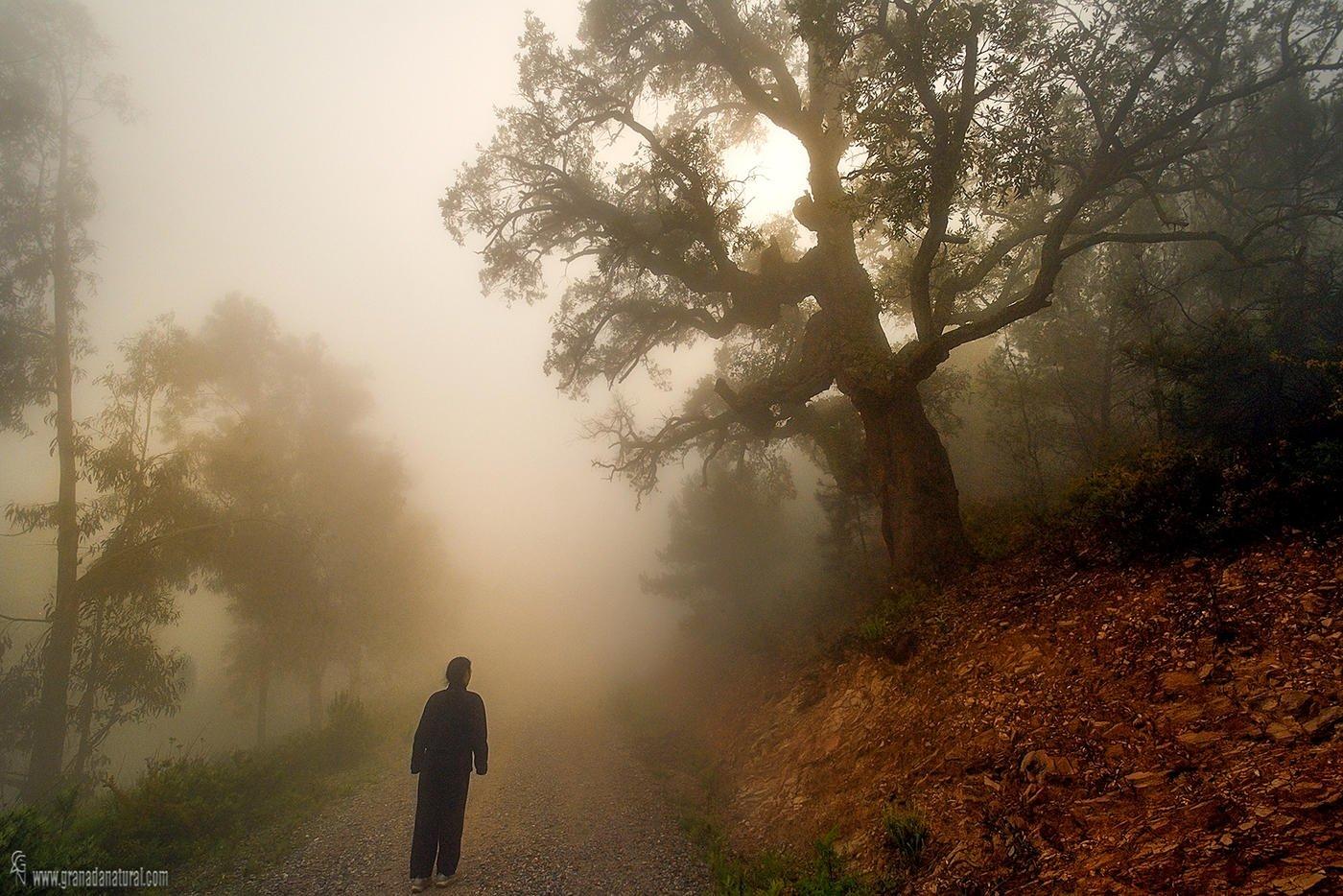 Paseo por el alcornocal  (Lucas Gutierrez Jiménez)