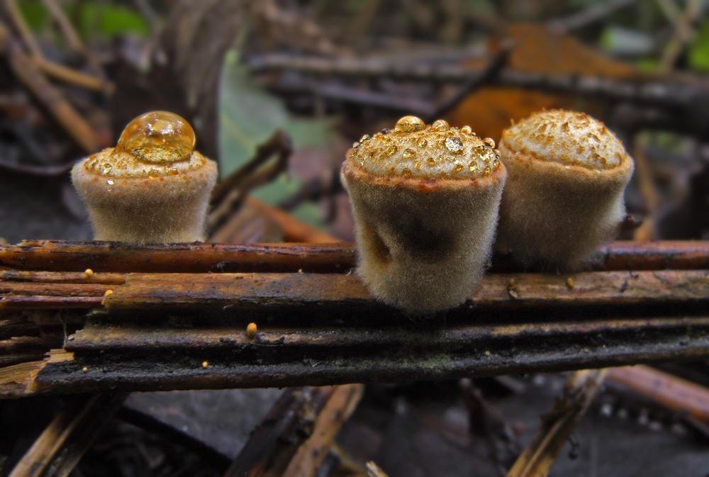 Pastelillos para Marta (Salvador Solé Soriano)