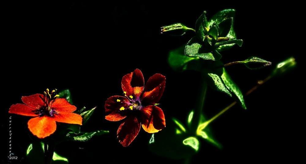 Pequeña flor (Curro Vázquez)