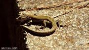 pequeño reptil.
