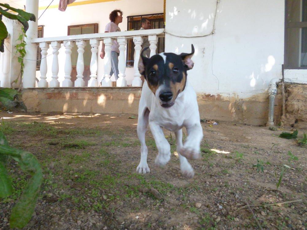Perro corredor (Cristina Antonio Salvador)