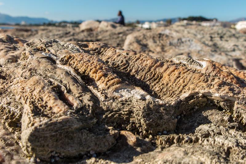 piedras orgánicas (Jose Luis Rubio Perez)