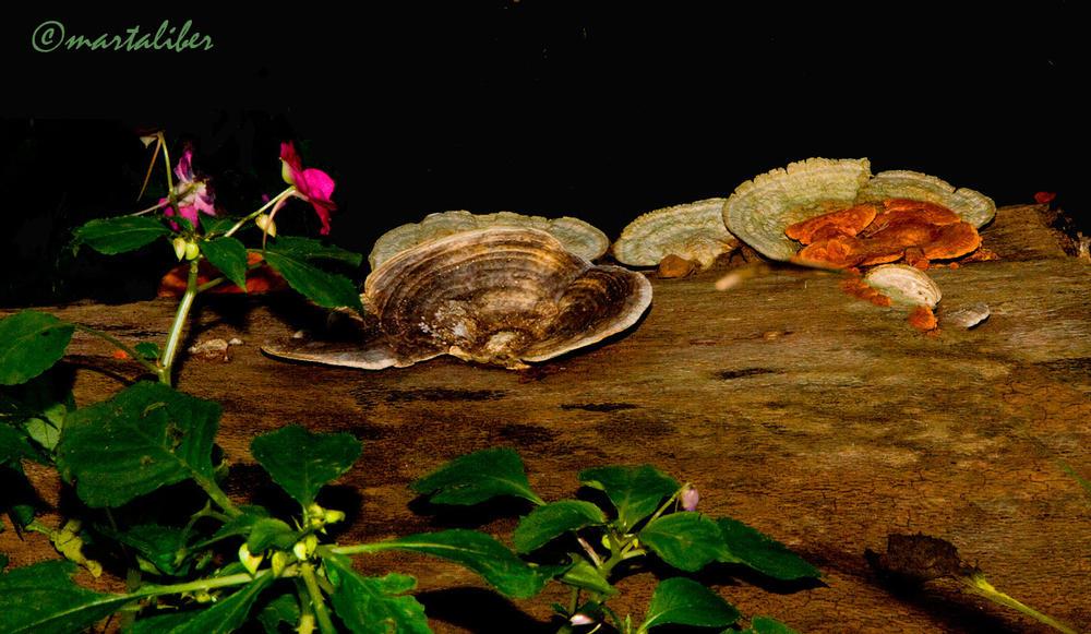 Plato del día:Hongos (marta Liber)