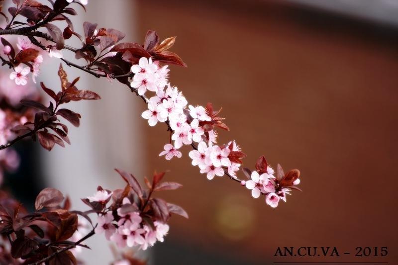 primavera (Antonio Cuenca.   vaya)