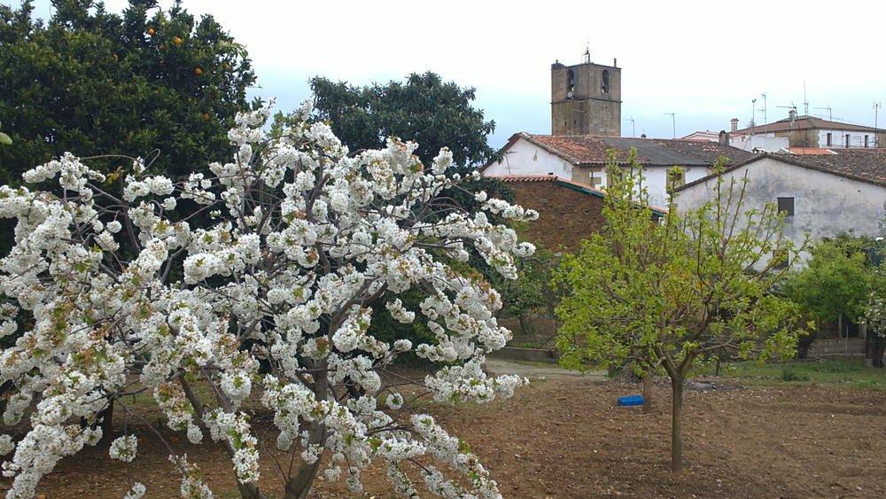 Primavera en mi pueblo (María Luceño Sánchez)