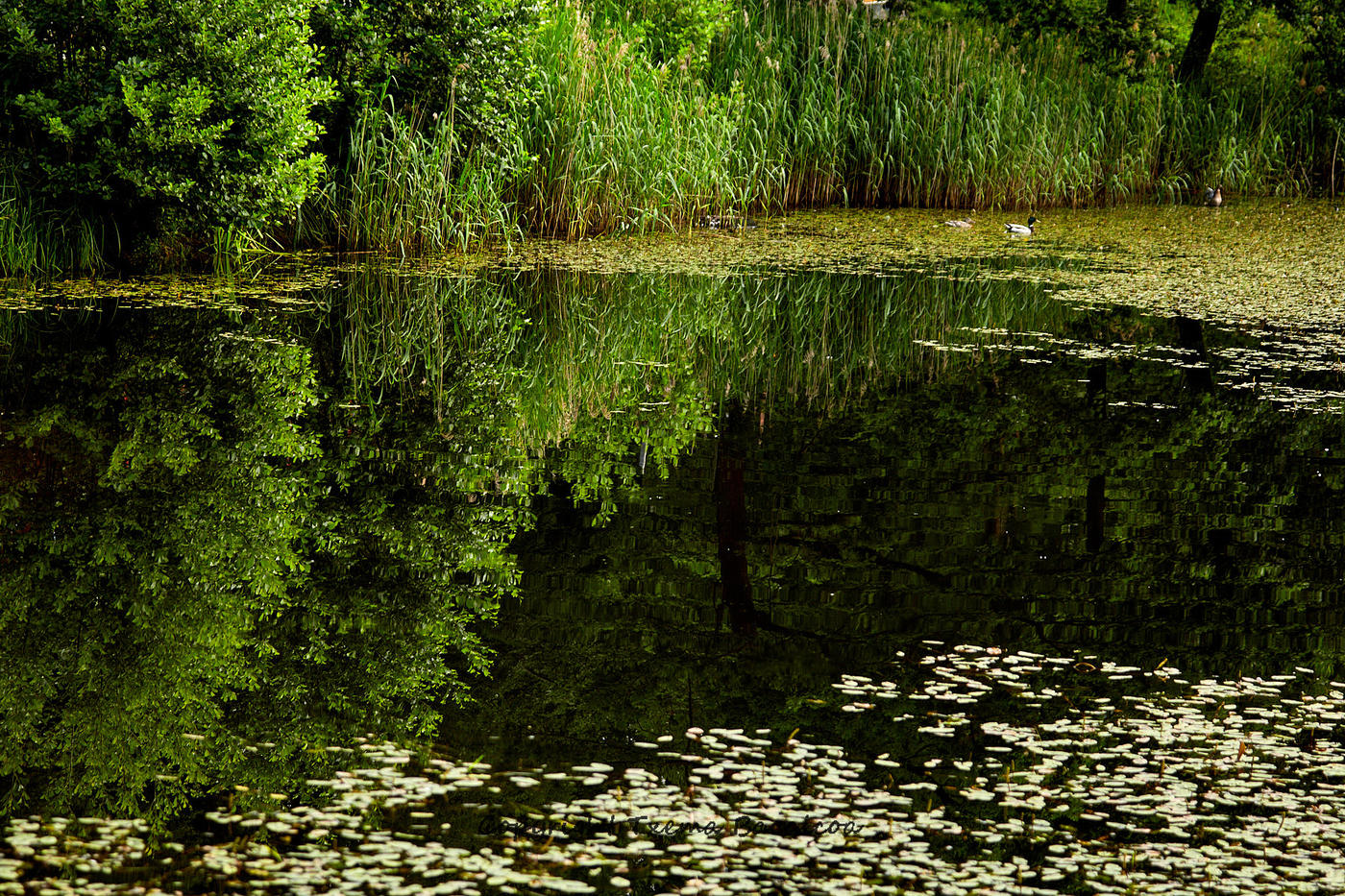 Reflejo con patos (Txema Bacaicoa (Colectivo IS))