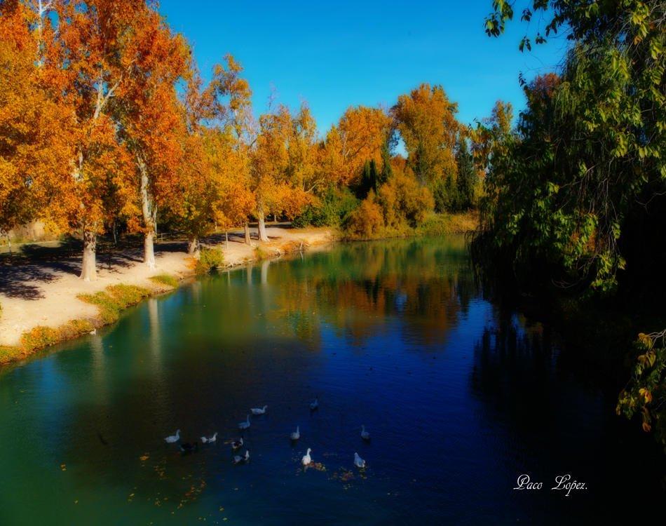 Reflejos de otoño (Paco lopez Requena)