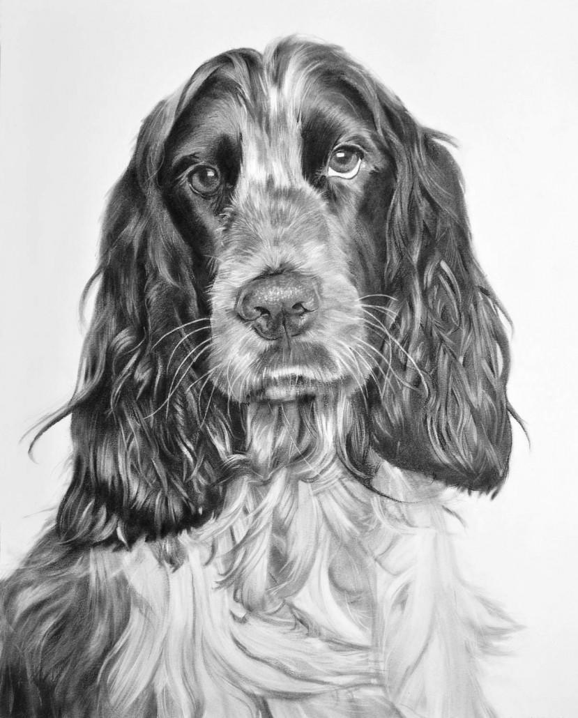 Retrato de mascota. Cocker (Galeria Del Retrato)