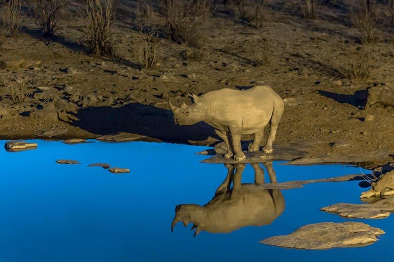 rinoceronte negro en charca azul (Jose Luis Rubio Perez)