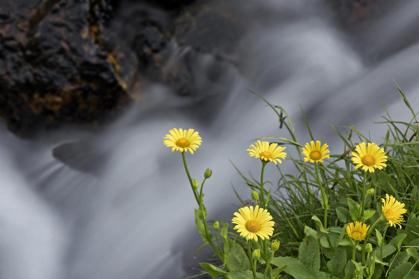 Roca, agua, flores (Salvador Solé Soriano)