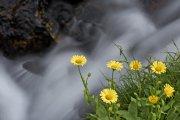 Roca, agua, flores
