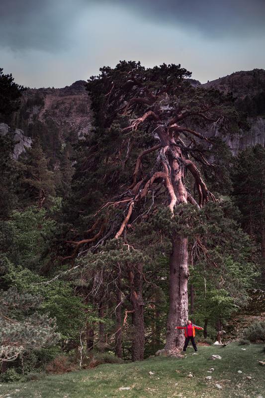 Rosa y el pino (Jose Luis Rubio Perez)