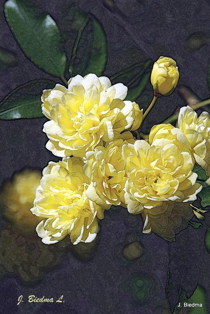 Rosas de pitiminí (José Biedma López)
