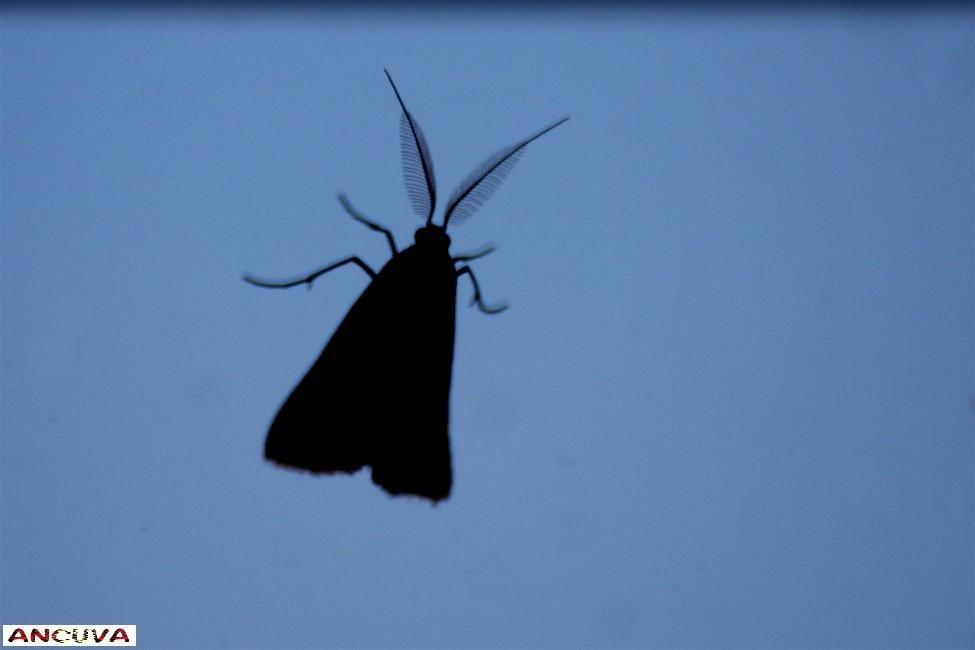 silueta en negro-1 (Antonio Cuenca.   vaya)