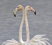 Simetría flamenca