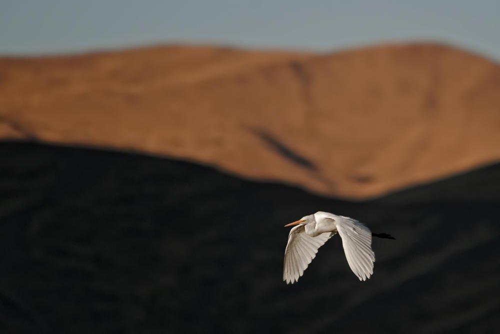 Sobrevolando el altiplano (Salvador Solé Soriano)