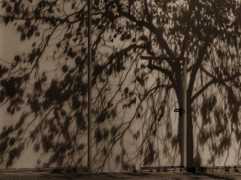 sombras nocturnas (Abrahan Manuel Francisco)