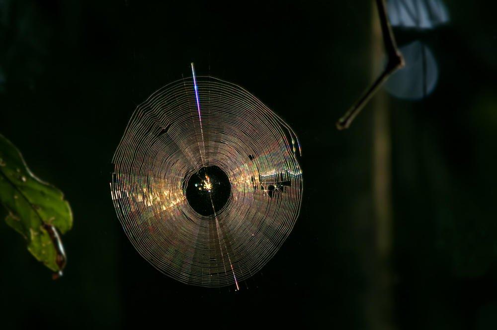 Telaraña CD (Salvador Solé Soriano)