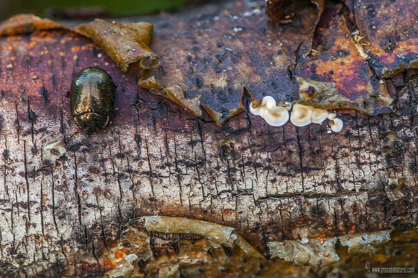 Texturas  y vida en el tronco (Lucas Gutierrez Jiménez)