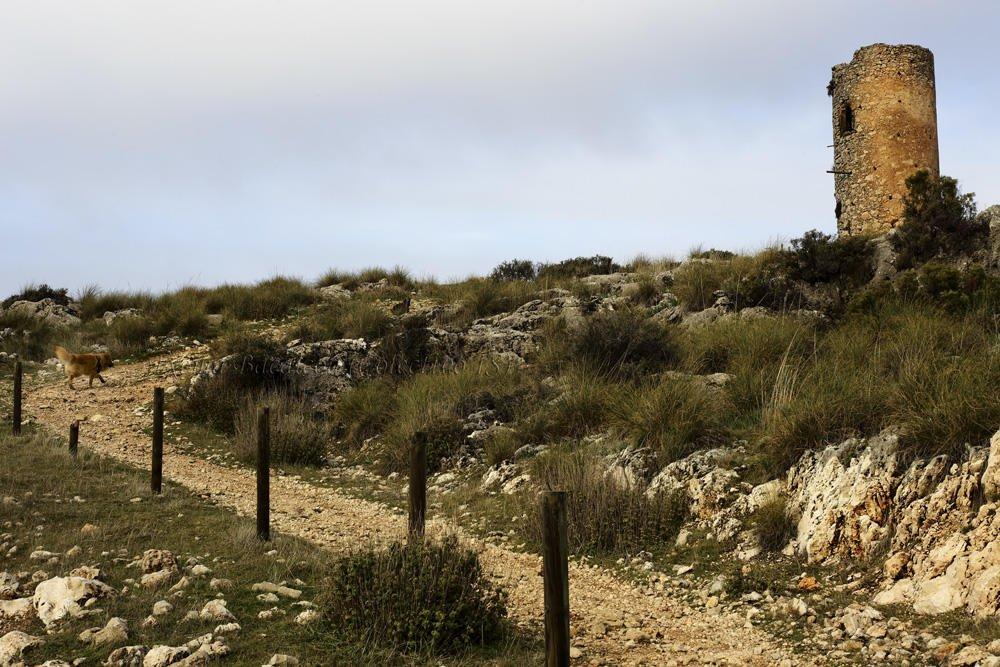 Torre de Cogollos (Txema Bacaicoa (Colectivo IS))