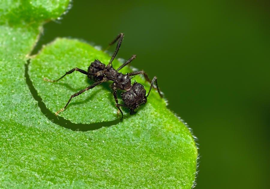 Trabajo de hormiga (Luis Felipe García Bergara)