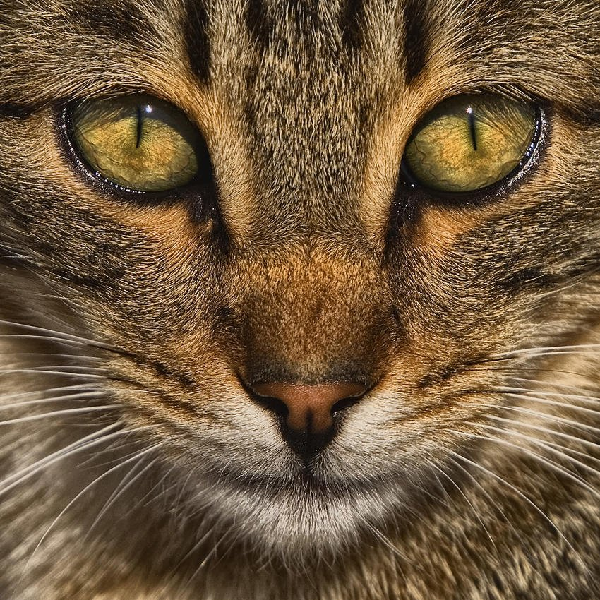 Un gato (Salvador Solé Soriano)