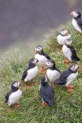 Un grupo. Islandia 158