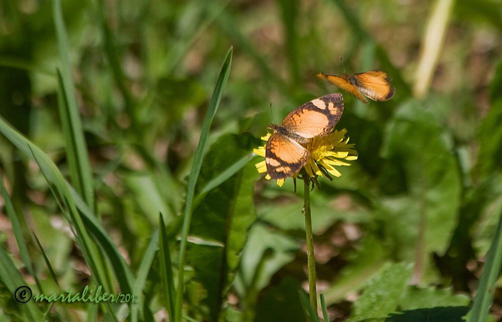 Una en vuelo (marta Liber)