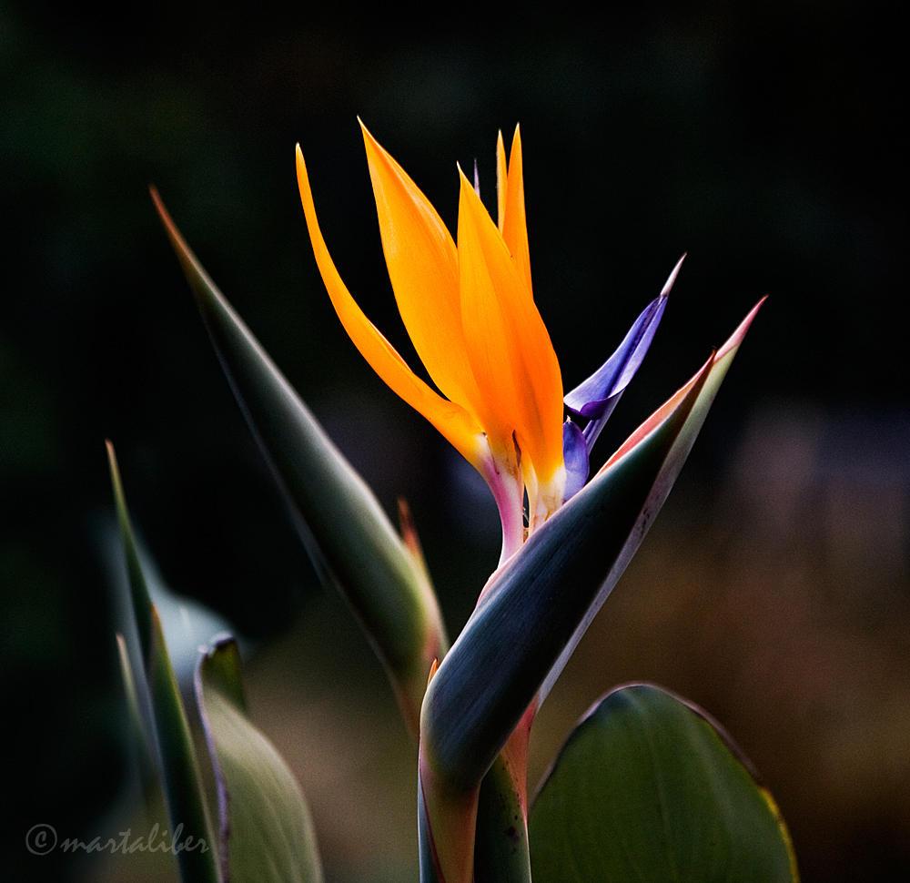 Una Flor (marta Liber)