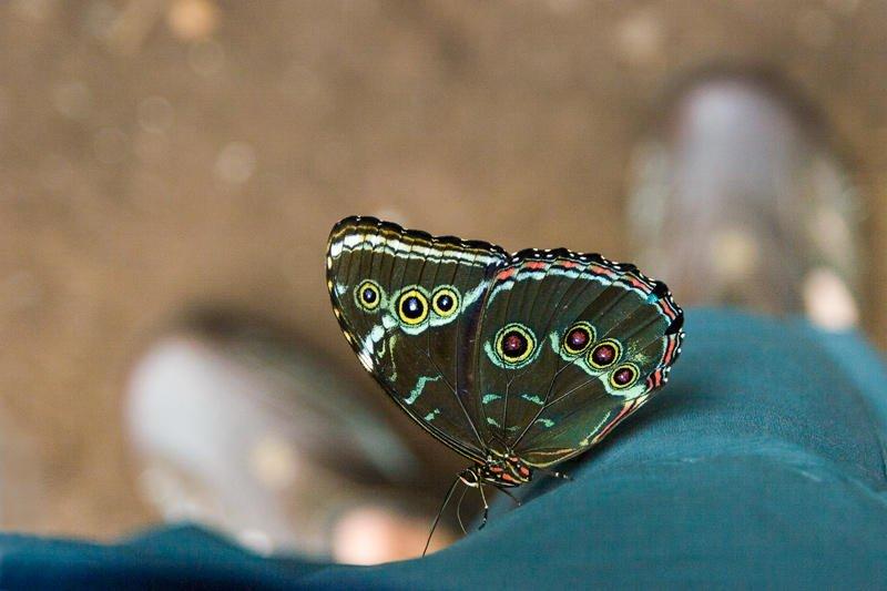 una mariposa indiscreta (Jose Luis Rubio Perez)