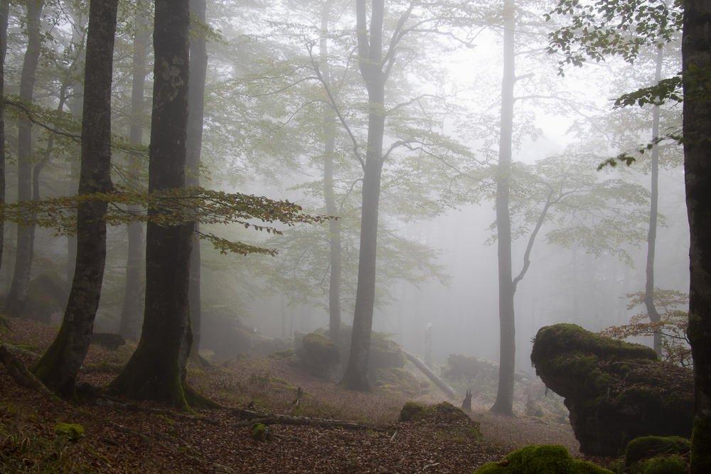 Urbasa, bosque encantado. (Antonio Cantabrana Mardones)