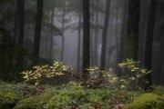 Urbasa, promesa de otoño