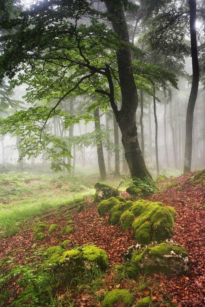 Verdes veraniegos (Txema Bacaicoa (Colectivo IS))